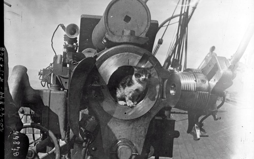 котик в пушке